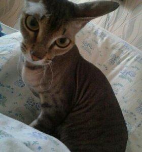 вязка с котом только красивым))))