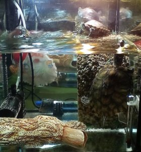 Аквариум с черепашками.
