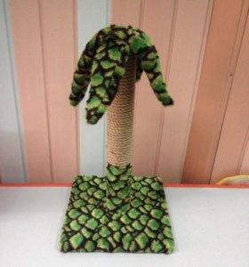 Когтеточка пальма