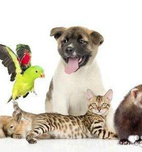 Помощь в пристрое животных