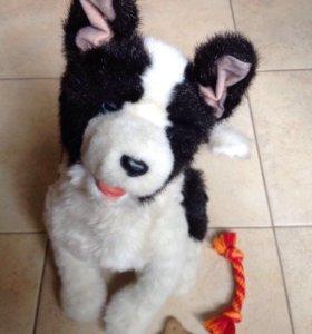 Интерактивный щенок FurReal friends Hasbro