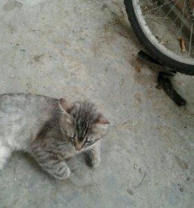 Кот редкой породы