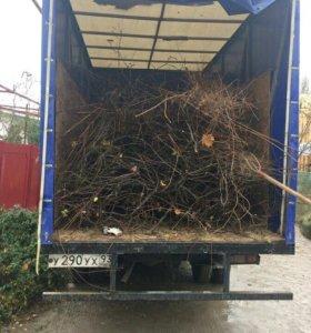 Вывоз Веток мусор Краснодар