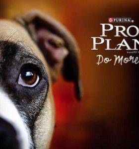 Корм Проплан для собак