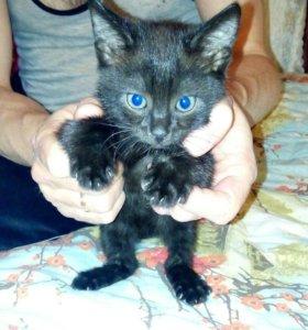 Отдается котенок в добрые руки.