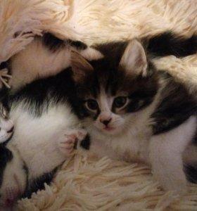 Пушистинькие котята к добрые руки, срочно