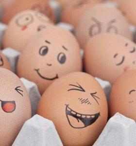 Яйца куриные,домашние