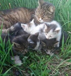 Котята от кошки мышеловки