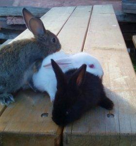 Кролята