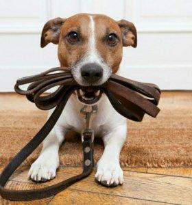 Выгул собак недорого цена за час
