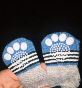 Носочки для собак