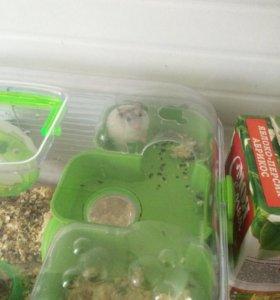 2 хомячка и клетка