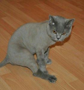 Стрижка кошек.