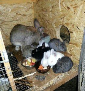 Крольчата !!