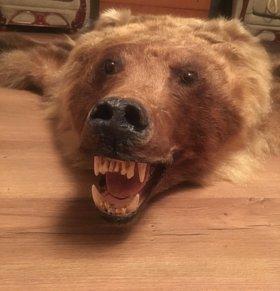 🎁Шкура бурого медведя