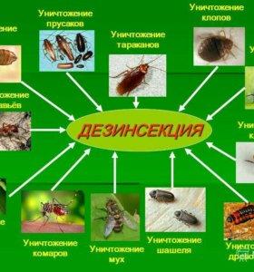 Уничтожение крыс,мышей,насекомых,клещей