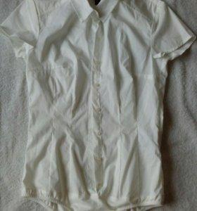 Блуза-боди