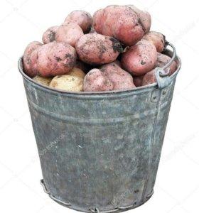 продам картофель 10 ведер