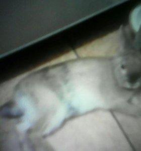 Декаротивный кролик