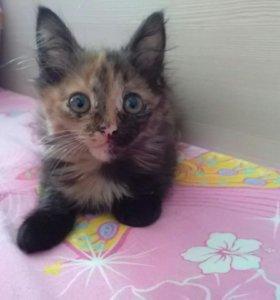 Кошочка