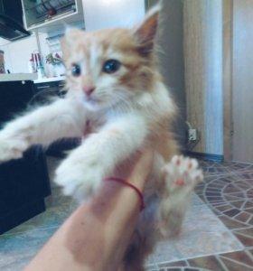 Отдам котёнка!