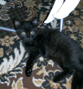 Котик 2 месяца, к туалету приучен