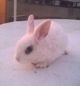 Декоративные карликовые крольчата