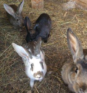 Продам домашних кроликов различных парод.