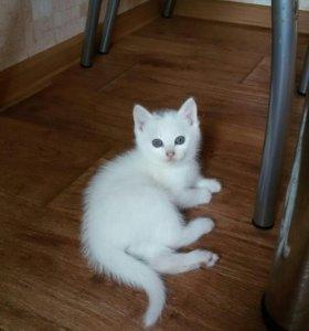 Симпатичные ласковые белые котята.