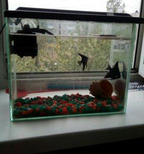Аквариум.С.рыбками+Грунт.14.литров.