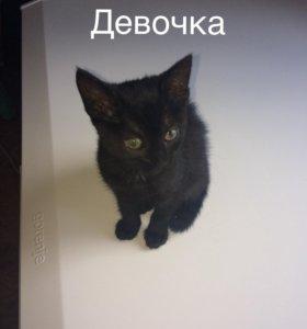 Котята отдам