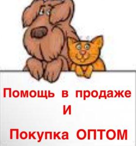 Мини собачки