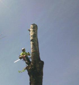 Спил, снос, удаление деревьев любой сложности