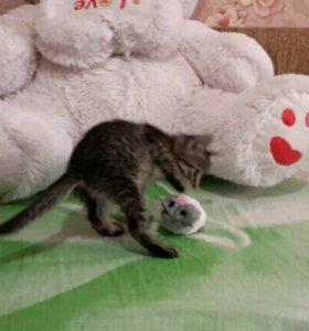 Отдам котенка(девочка)