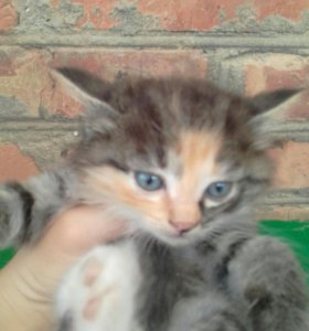 Маленька кошечка