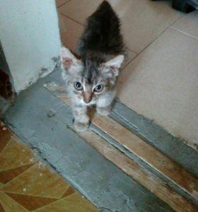 Кошечка Соня 3 месяца