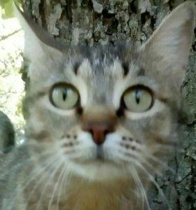 Стерилизованная ласковая кошка