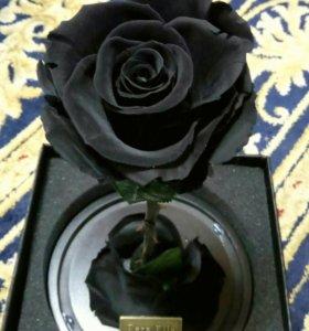Розы в колбе. Опт и розница.