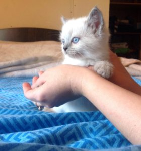 Кошечка срочно ищет дом
