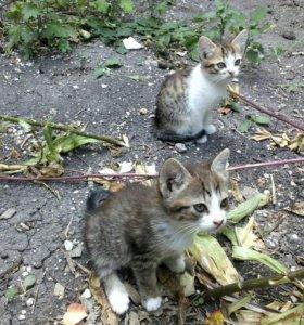 Котята :3
