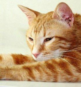 Апельсиновый кот Владик