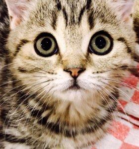 Глазастая красотка кошечка страйт мрамор