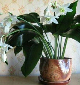 Домашние комнатные цветы Ишим