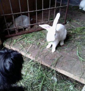 Кролики или мясо кроликов
