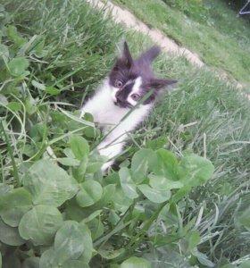 Котёнок даром с подарком,с доставкой по Домодедово