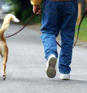 Выгулка собак средних и  маленьких  пород