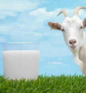 Козье молоко