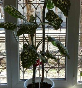 Растение с горшком