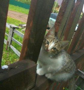 Котята обыкновенные от мамы мышеловки