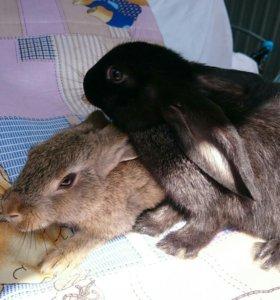 Кролики молодняк.
